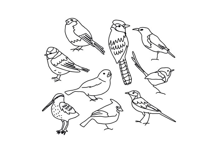 700x490 Birds Drawings