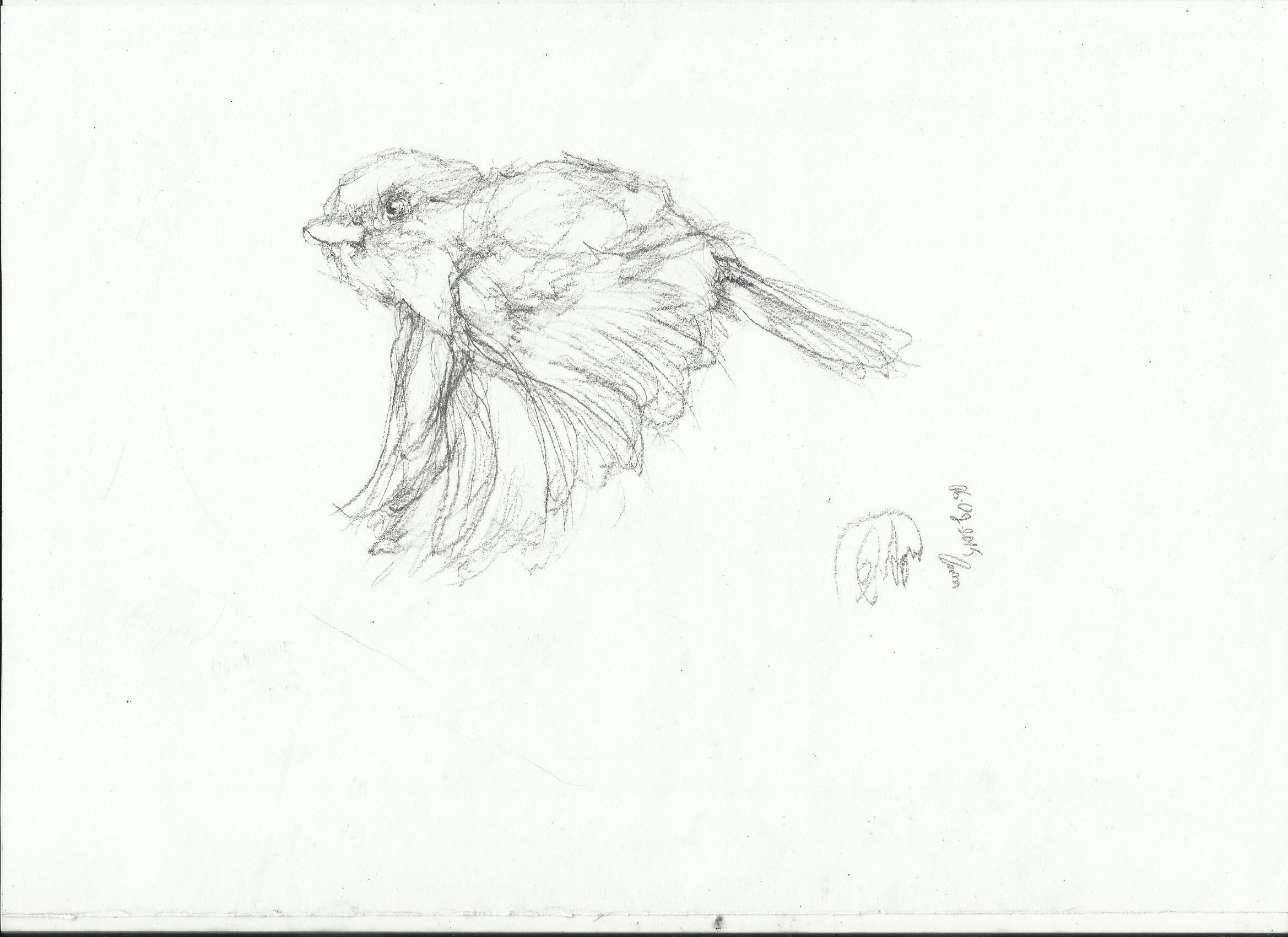 2338x1700 Bird Nightwithdeer