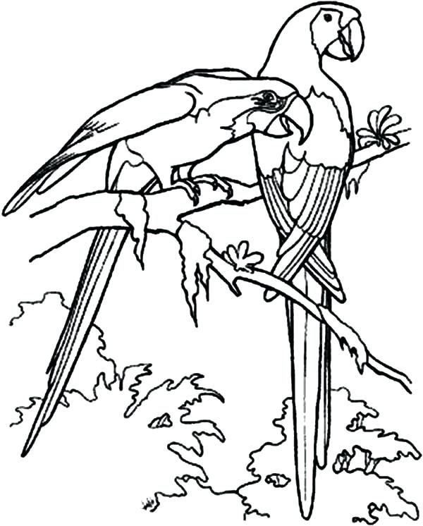 600x746 Bird Coloring Pages For Toddlers Love Birds Try To Attract Female