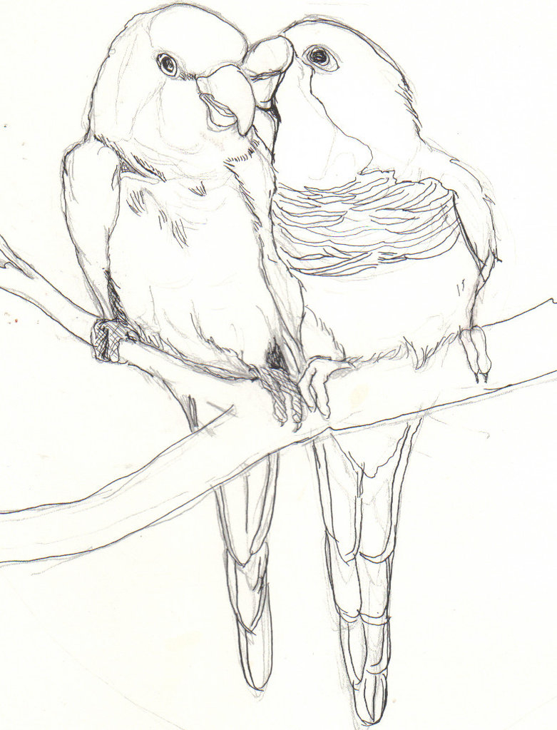 Love Birds Drawing Images At Getdrawings Com Free For Personal Use