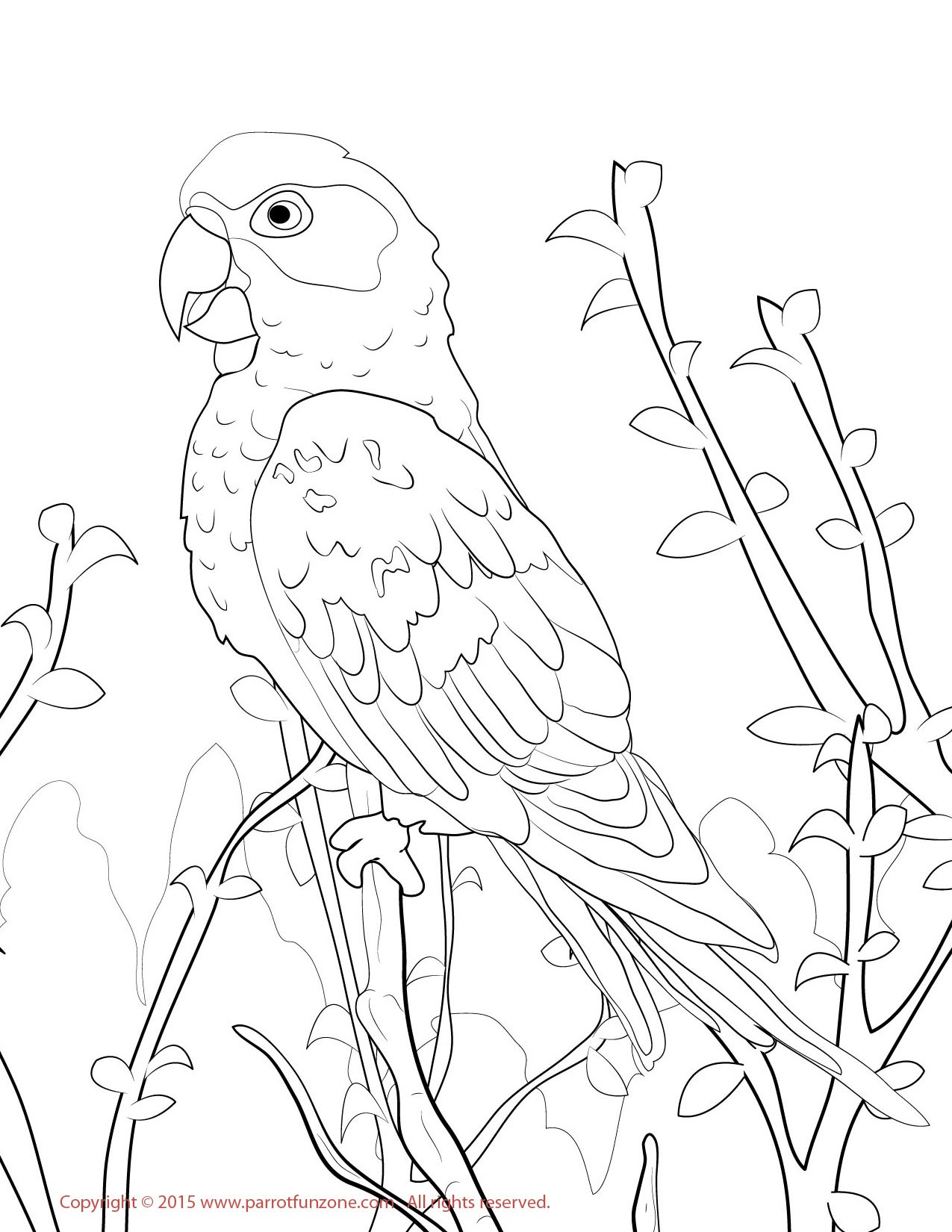 Lovebird Drawing at GetDrawings.com | Free for personal use Lovebird ...