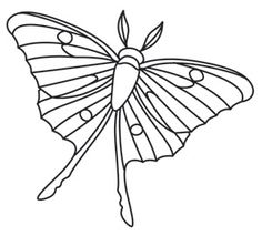 236x213 Luna Moth