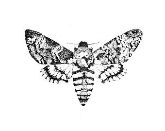 340x270 Moth Drawing Etsy