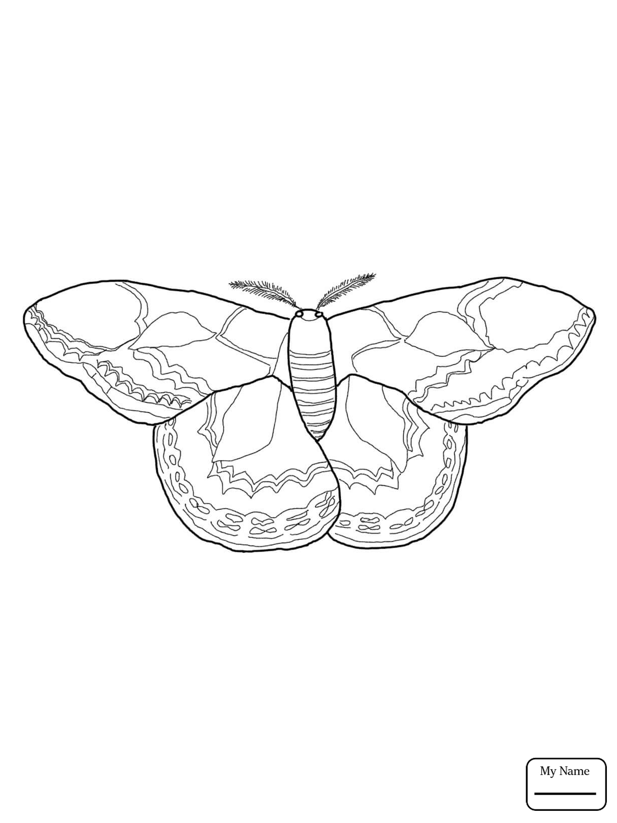 1224x1632 Coloring Pages For Kids Moth Realistic Luna Moth Insects