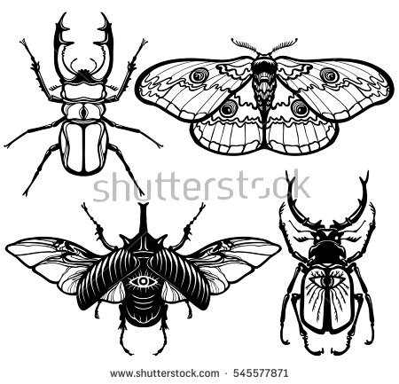 450x433 Pin Moth Clipart Drawn 4. Pin Luna Moth Clipart Simple 5. Pin