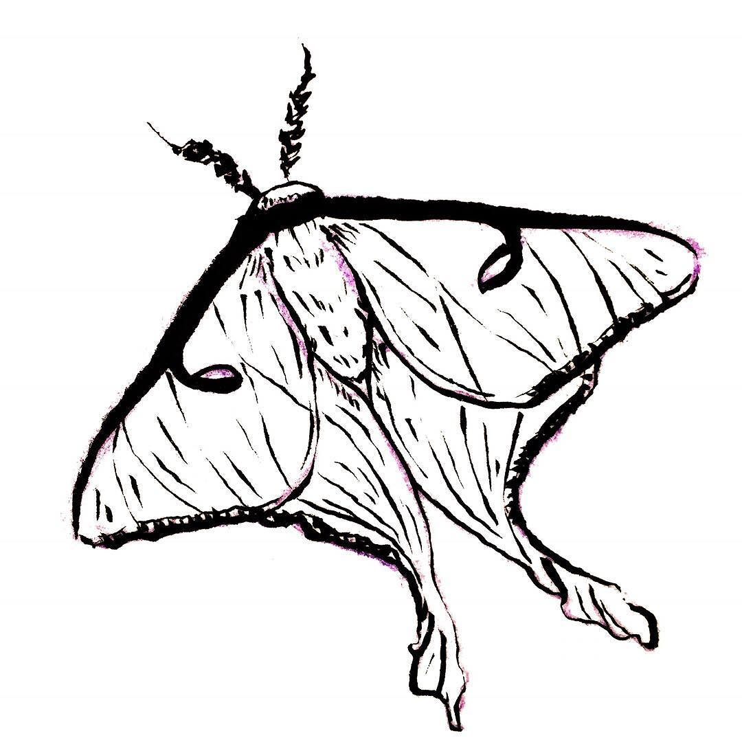 1080x1080 Another Messy Moth Doodle! I Love Luna Moths They'Ve Featured