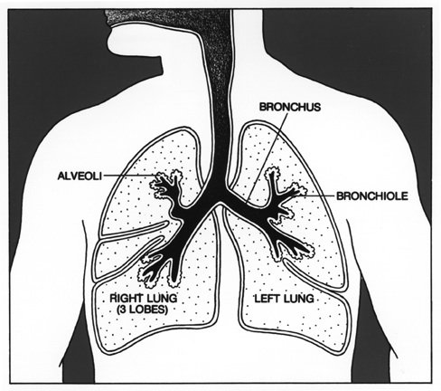 488x432 Lung Cancer Treatment Options And Explination Of Anatomy