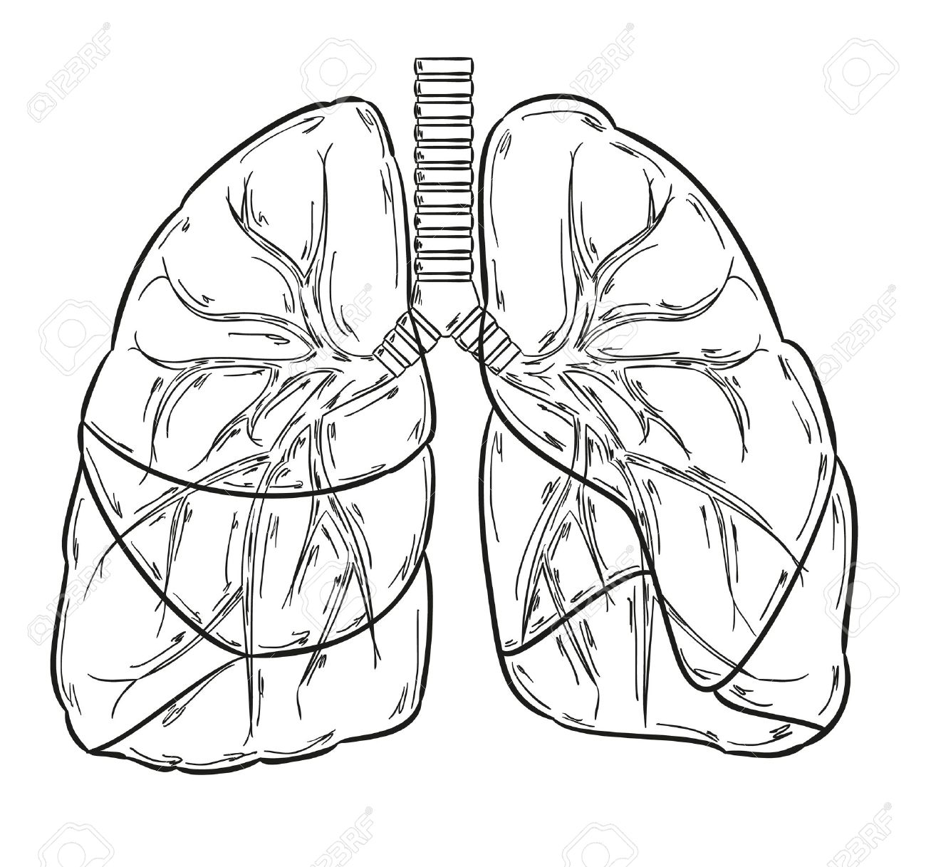 1300x1217 Sketch Of The Lungs On White Background Royalty Free Cliparts