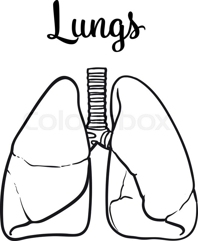 lung drawing at getdrawings com