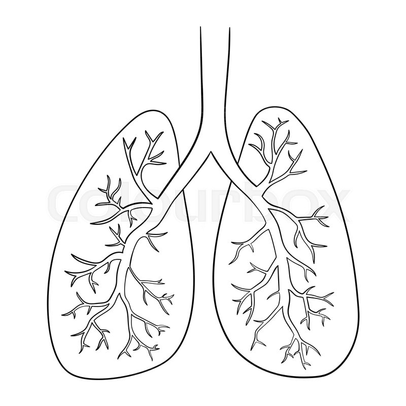 It is an image of Critical Human Lungs Drawing