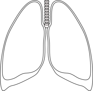 299x291 Lung Clear Lung Clip Art