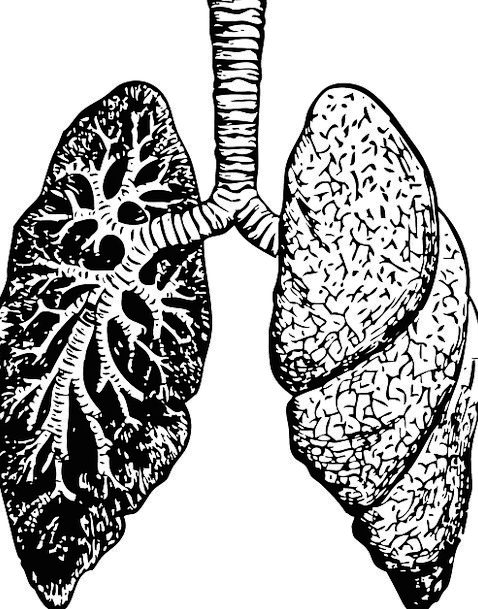 lungs drawing at getdrawings com