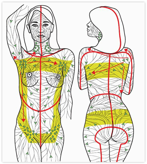Lymphatic System Drawing At Getdrawings Com