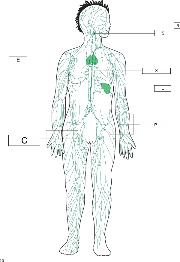 Lymphatic System Drawing At Getdrawings Free For Personal Use