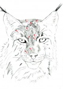 213x302 How To Draw A Realistic Lynx, Step By Step, Realistic, Drawing