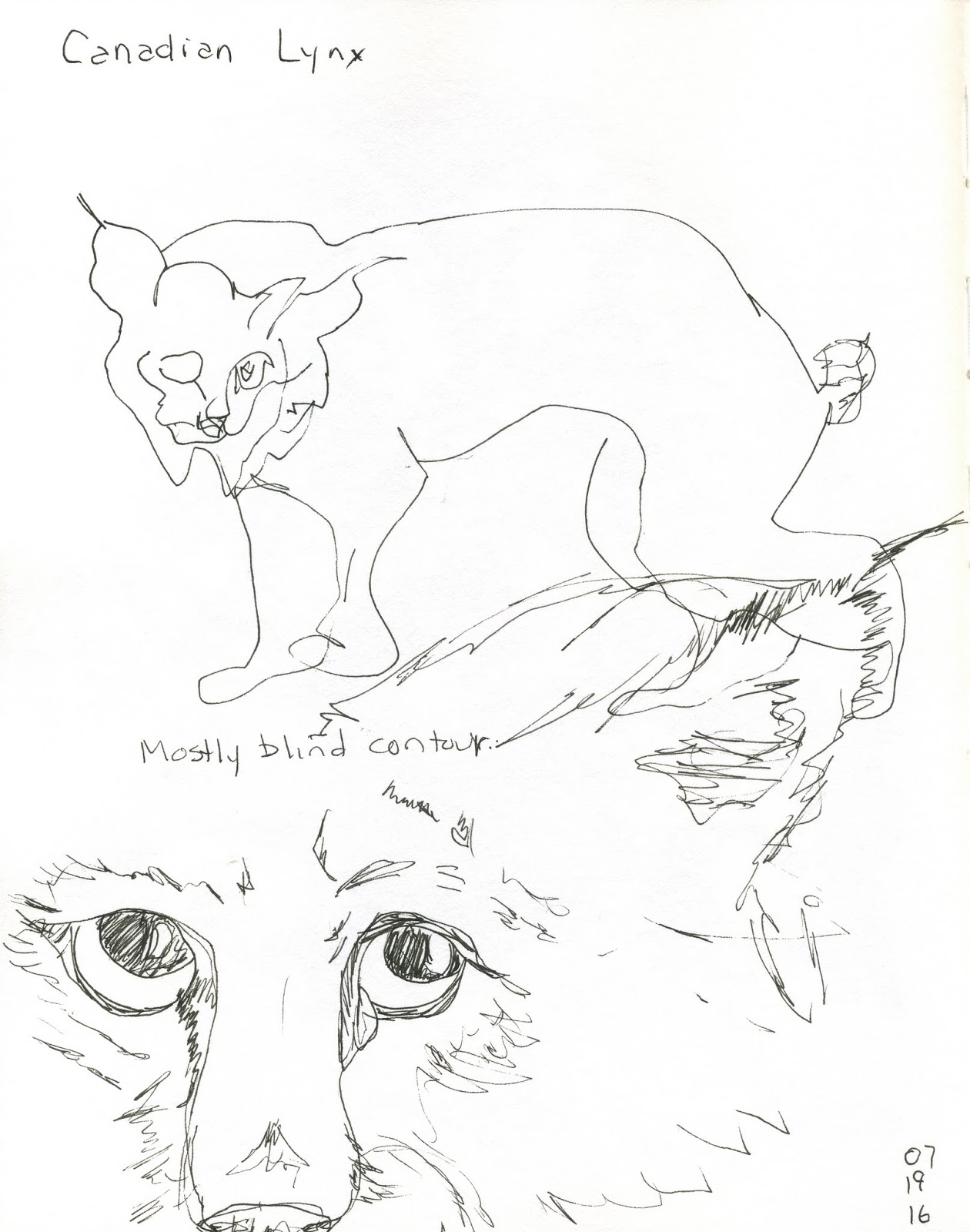 1260x1600 Scribbling With Spirit Sketching A Canadian Lynx