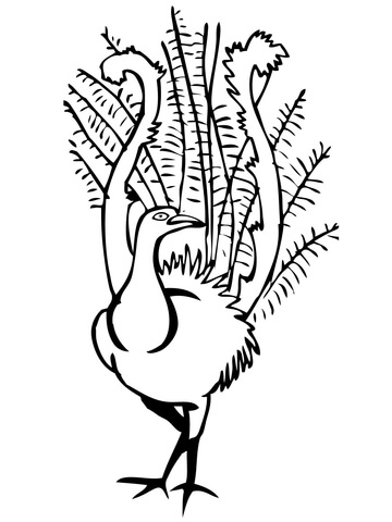 360x480 Lyrebird Coloring Pages Free Coloring Pages