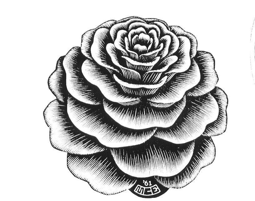 816x642 Flower