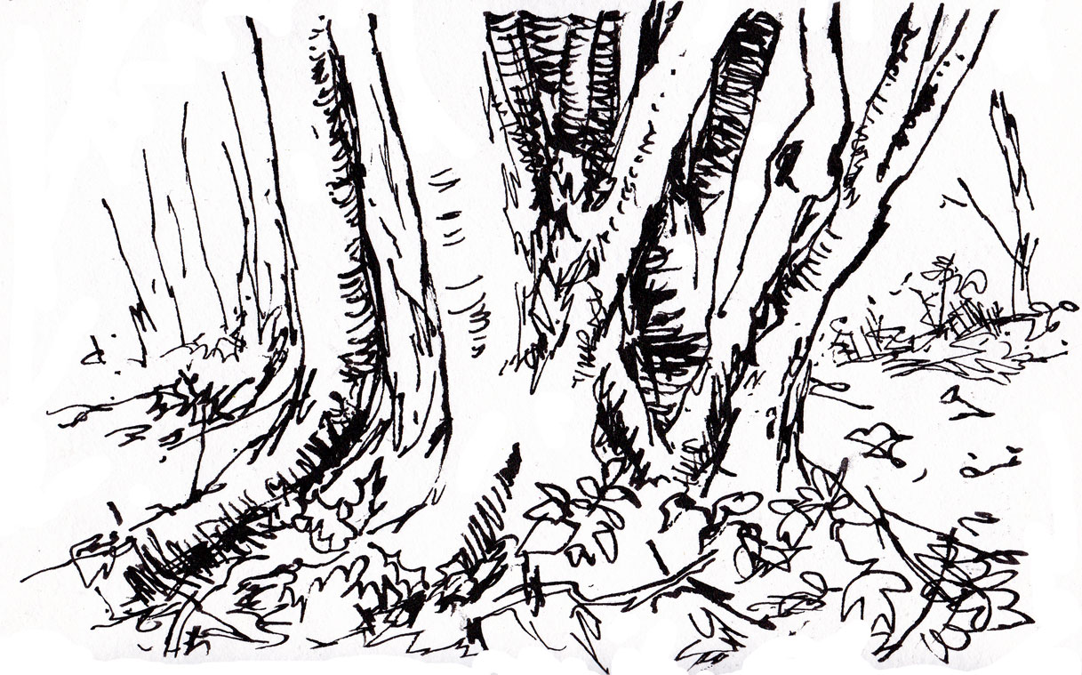 1217x759 Drawing Trees 92 Michael Gage