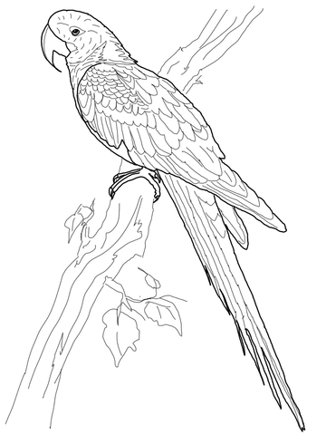 360x480 Hyacinth Macaw Coloring Page Free Printable Coloring Pages
