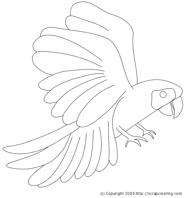 600x630 Macaw Coloring Page