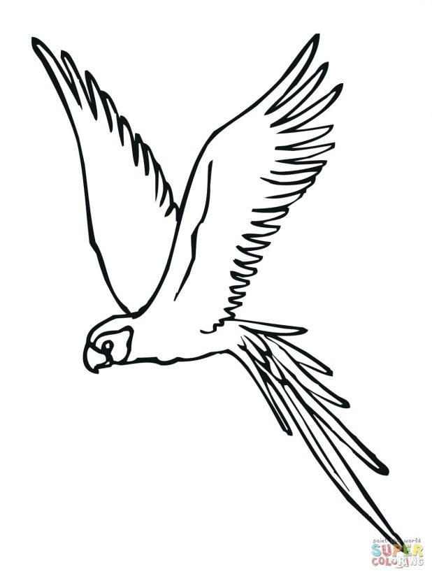 618x824 Pin Drawn Parakeet Bird Fly 45 Exciting Scarlet Macaw Coloring