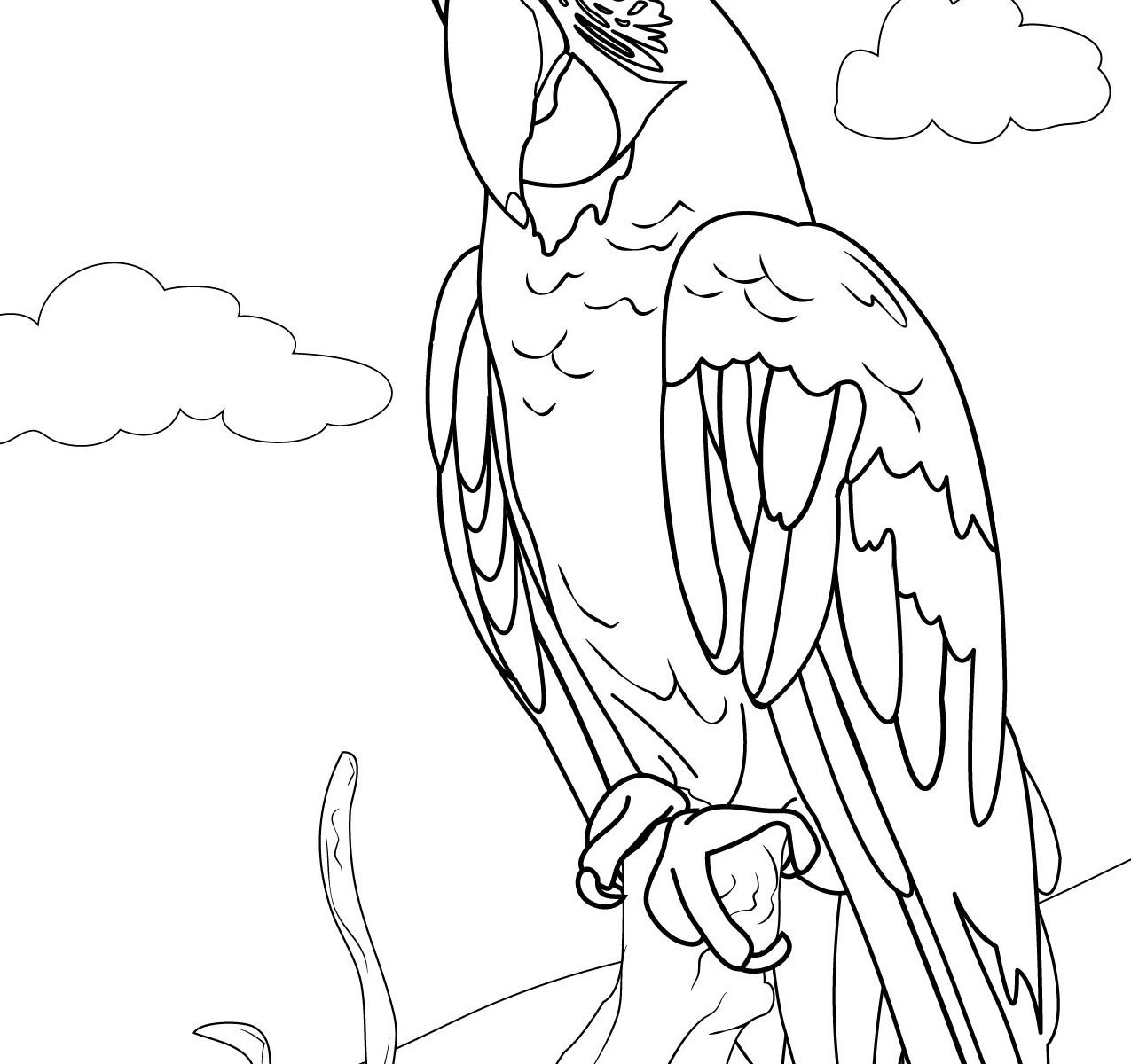 Macaw Drawing at GetDrawings.com | Free for personal use Macaw ...
