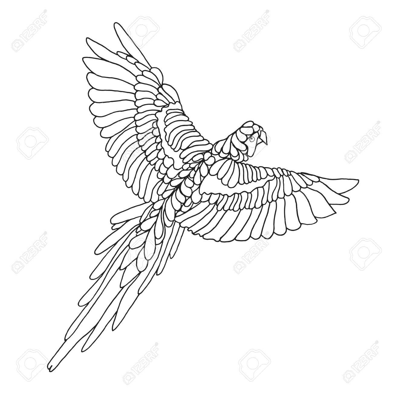 1300x1300 Zentangle Stylized Macaw Parrot. Birds. Black White Hand Drawn