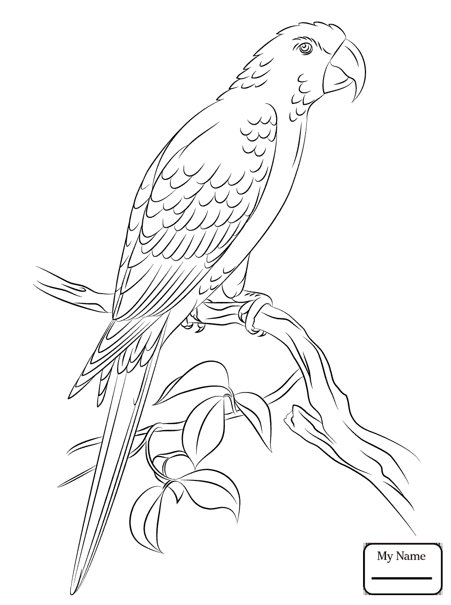 913x1224 Birds Hyacinth Macaw Coloring Pages For Kids