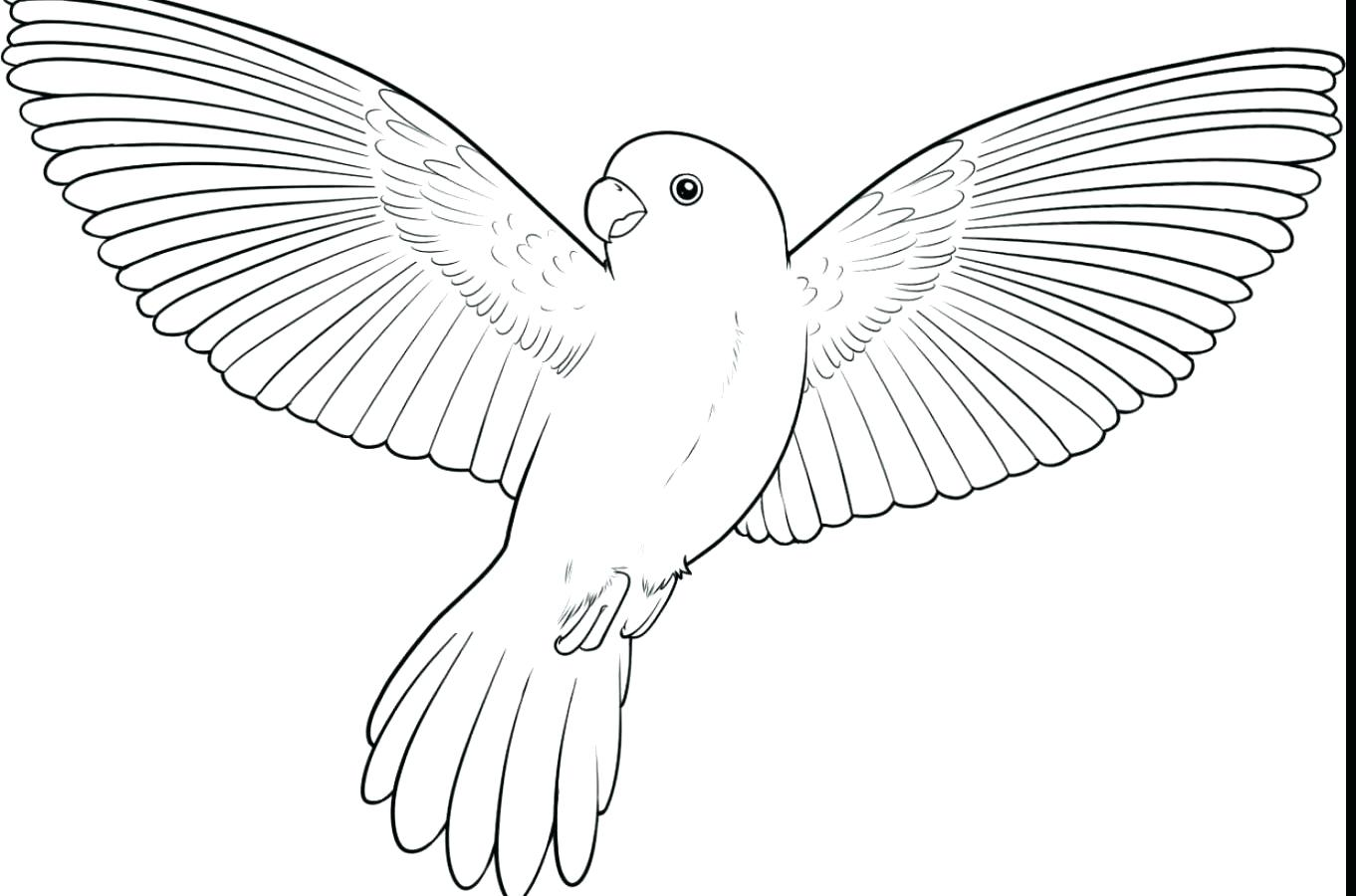 1362x900 Coloring Macaw Coloring Pages