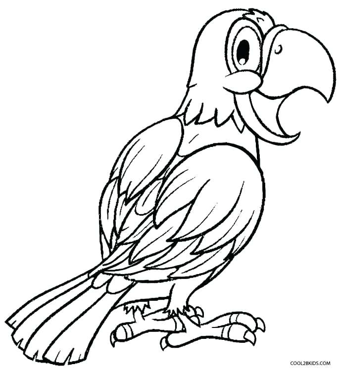 685x750 Macaw Coloring Page Cortefocal.site