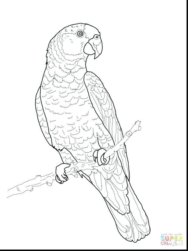 618x824 Macaw Coloring Pages Davidparker.co