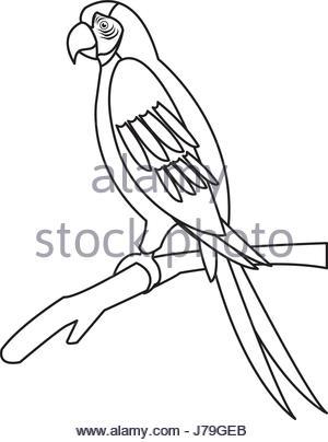 300x404 Macaw Parrot Brazil Outline Stock Vector Art Amp Illustration