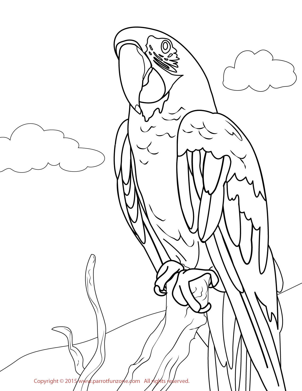 1275x1650 Greenwing Macaw