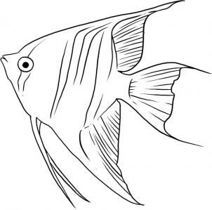302x299 44 Best Drawing Fish Images On Pisces, Drawings