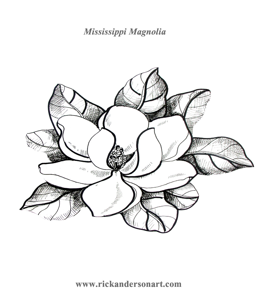 Magnolia Drawing At Getdrawingscom Free For Personal Use Magnolia
