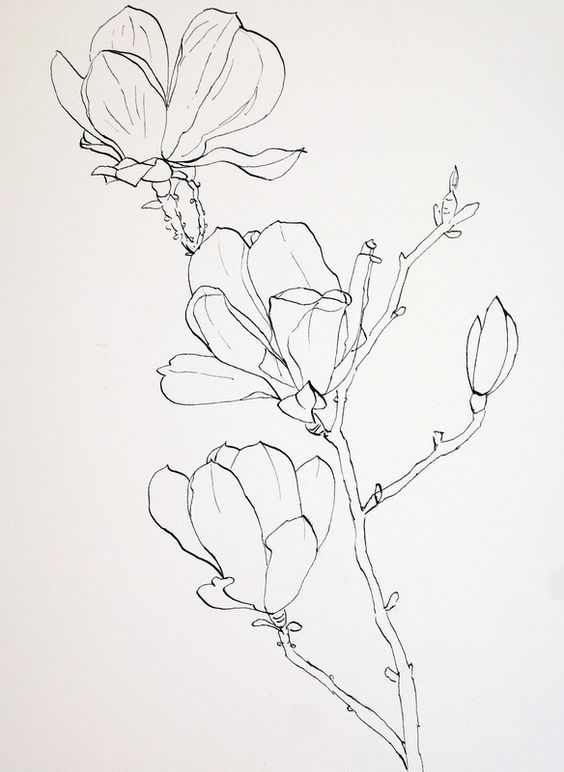 564x772 Pen Drawings Of Flowers Completed Ink Drawing Of Pink Magnolia