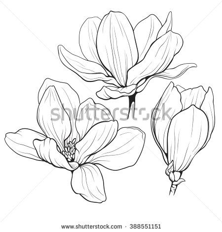 450x470 Black And White Line Illustration Of Magnolia Flowers On A White