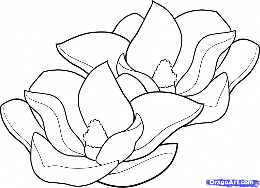 1024x740 Magnolia Flower Drawing How To Draw Magnolias, Magnolias, Stepstep
