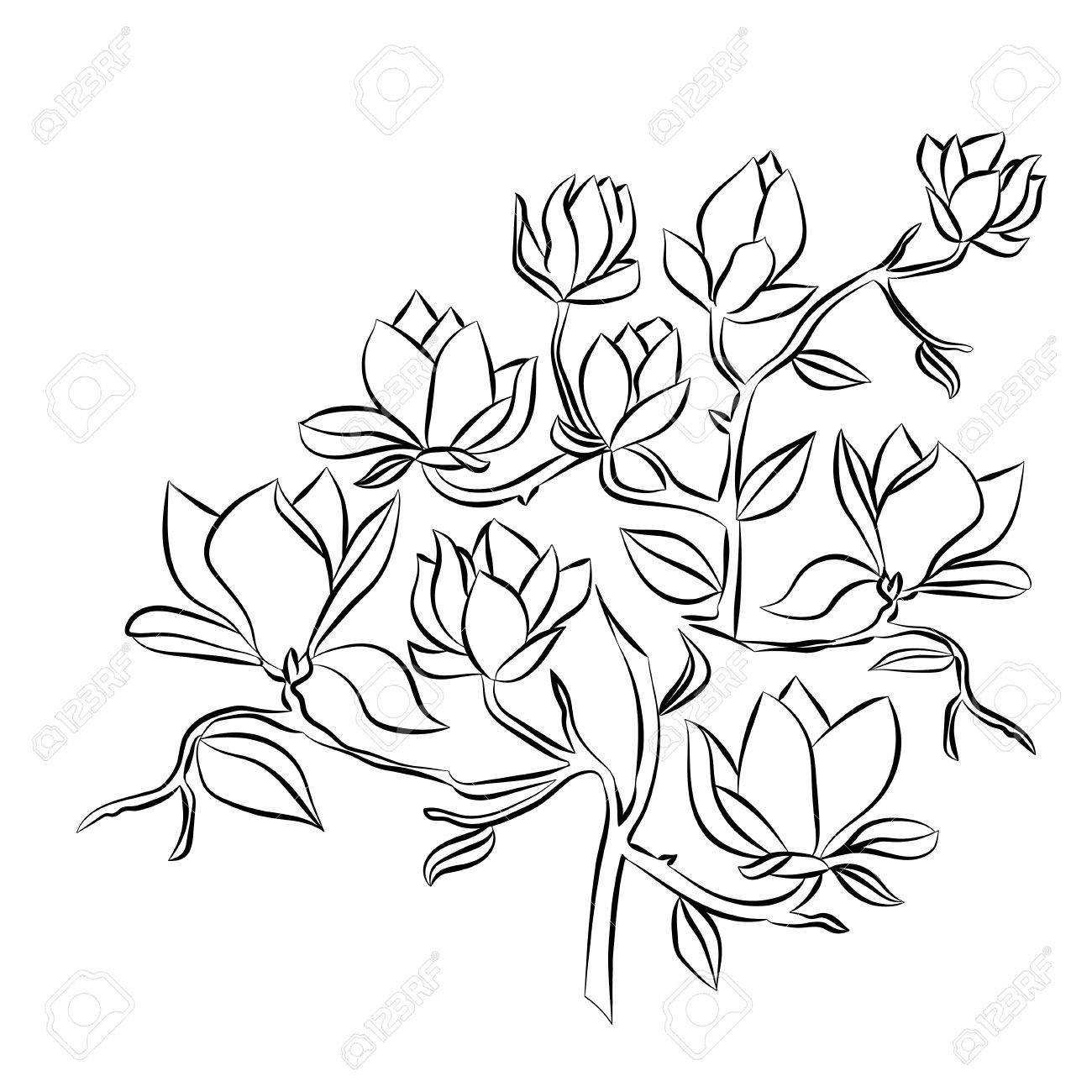 1300x1300 Flowering Branch Of Magnolia On White Background Hand Drawn