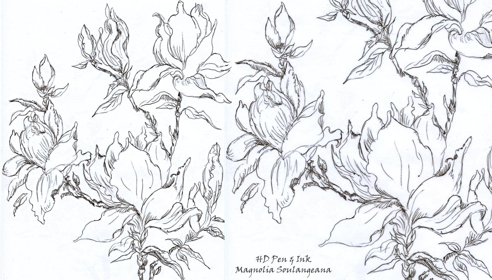 1580x900 Flowering Magnolia Tree Stencil Design Inspirations