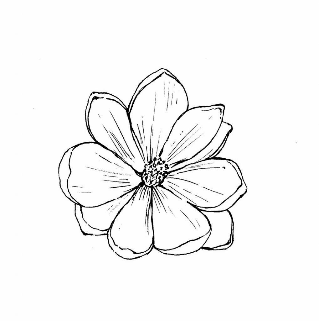 1019x1024 Magnolia Flower Drawing