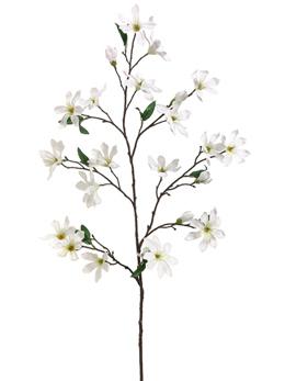260x347 Magnolia Flowering Branches Cream Flowers 44