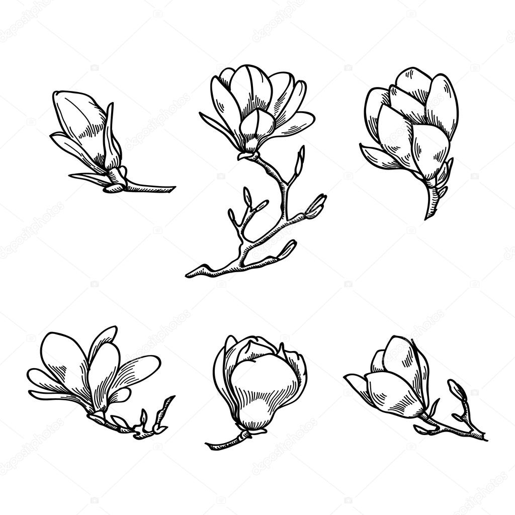 1024x1024 Spring Magnolia Flower Black And White Hand Drawn Vector Sketch