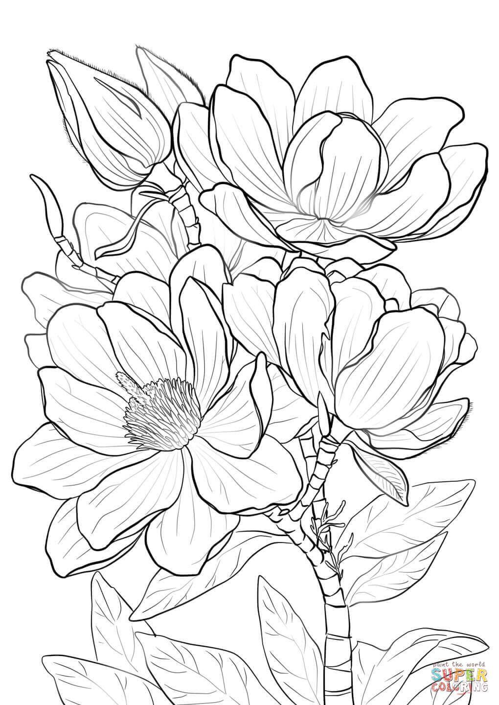 1020x1440 Campbells Magnolia Super Coloring Drawing Flowers Tutorials