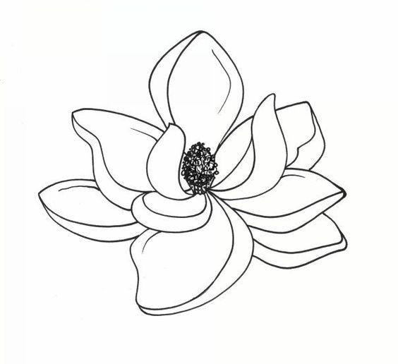 564x516 Flowers Magnolias Magnolia Flower And Tree Drawings