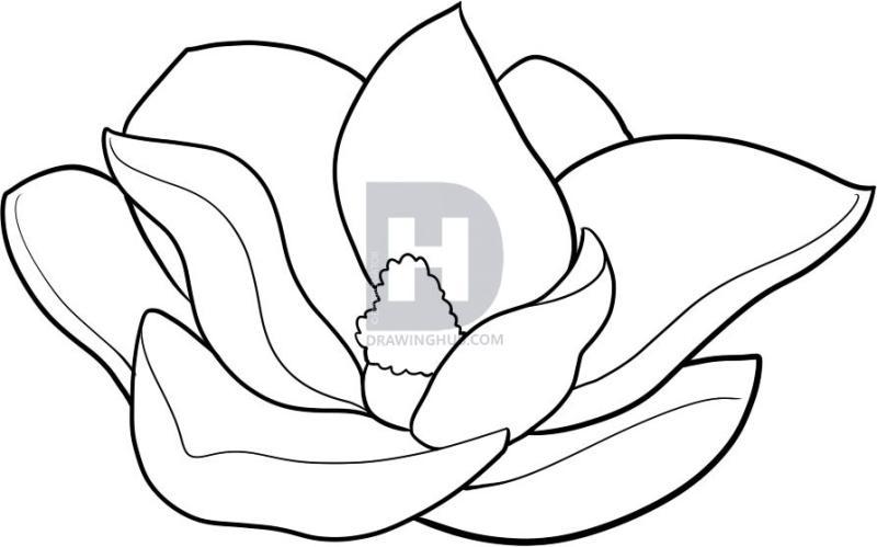 800x499 Magnolia Flower Clip Art
