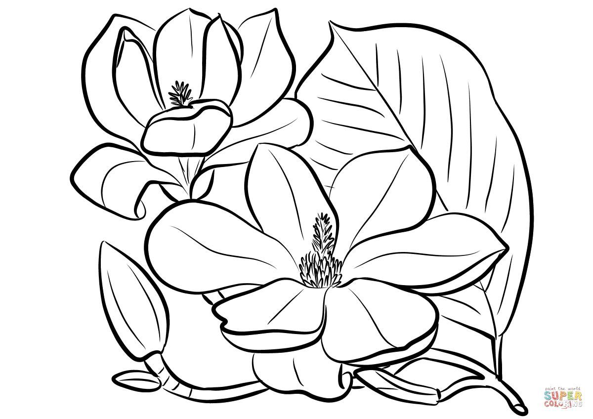 Magnolia Flower Drawing At Getdrawingscom Free For Personal Use