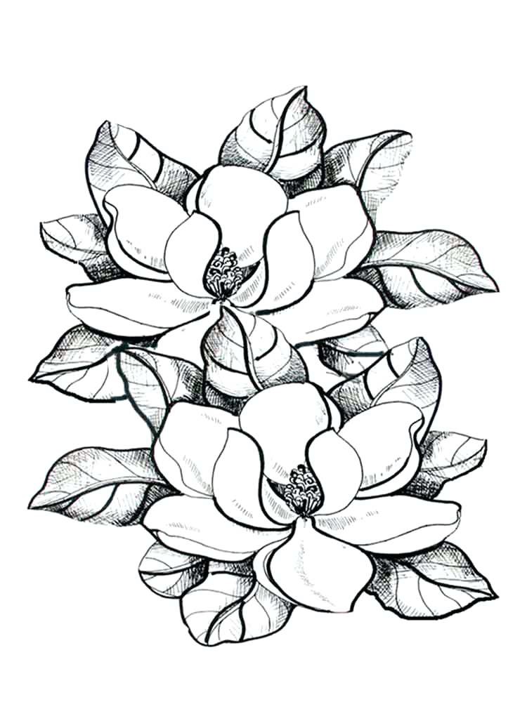 750x1000 Flower Color Pages Magnolia Flower Coloring Pages Flower Color