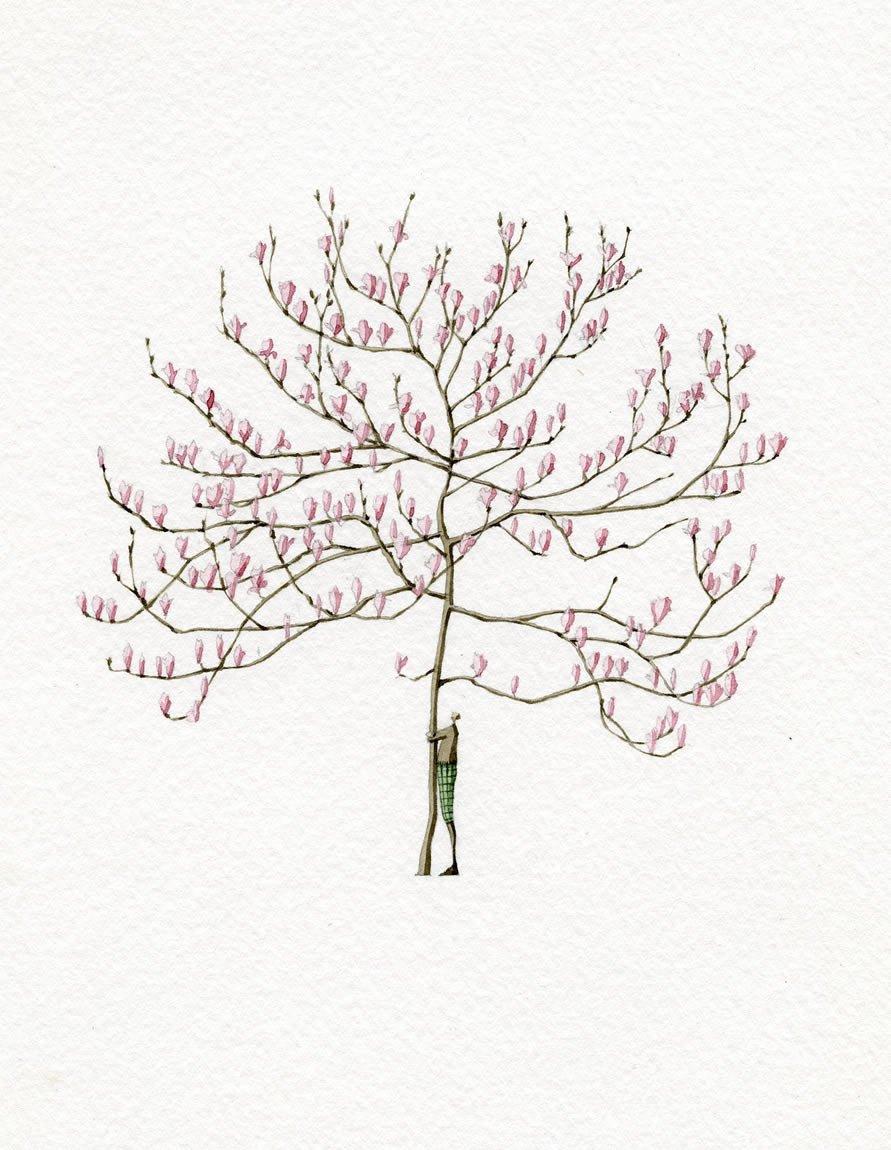 891x1150 Magnolia Man Mounted Print Laura Stoddart